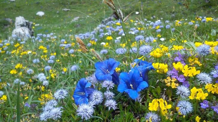 Fruehlingsblumen mit Enzian