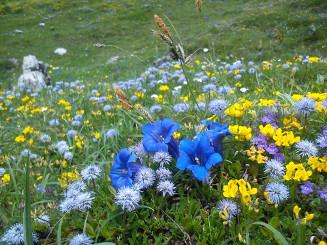 fruehlingsblumen-mit-enzian-vorschau